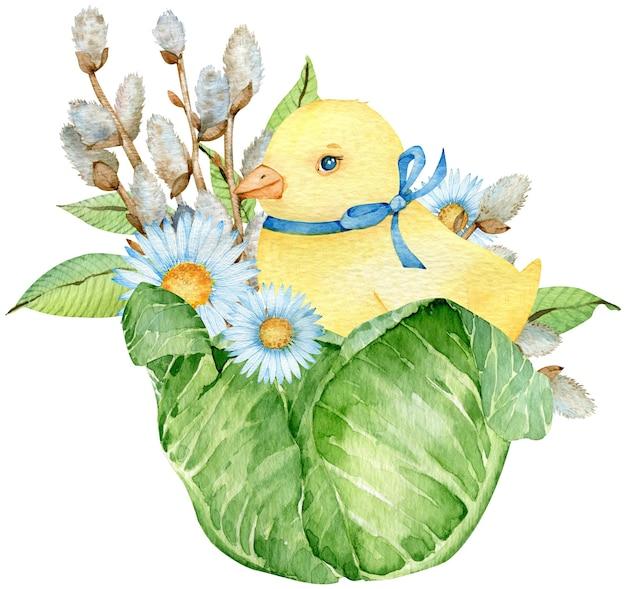 Pulcino giallo dell'acquerello che si siede nel cavolo con salice e fiori bianchi isolati