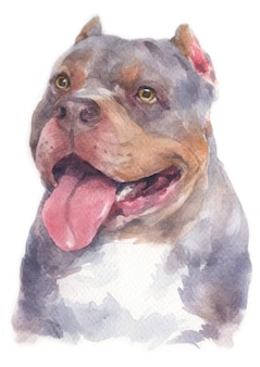 Pittura ad acquerello del cane pitbull