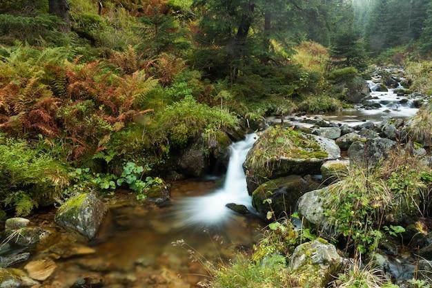 Schizzi di cascata in un ambiente verde puro in autunno