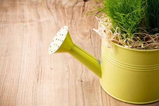Annaffiatoio piantato erba verde.
