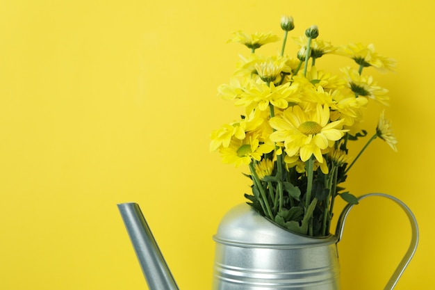 Annaffiatoio con crisantemi su sfondo giallo.
