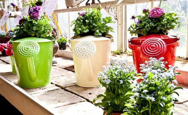 Annaffiatoi, concetto di giardinaggio e hobby
