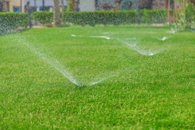Innaffiare l'erba del prato con acqua. natura.
