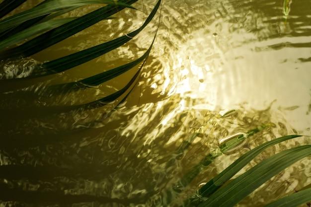 Gli alberi di waterpalm proiettano ombre sfocate sull'acqua liscia e increspata. sfondo astratto sfocato.