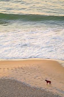 Onde che si infrangono sulla spiaggia sabbiosa piena di impronte e un cane