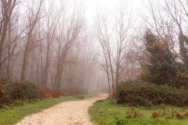 Strada tra la foresta di pioppi in inverno in una giornata nebbiosa misteriosa strada curva messa a fuoco selettiva