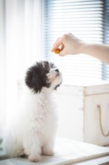 Ci stiamo allenando per nutrire il cibo per cani
