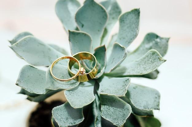 Anelli di nozze d'oro su una succulenta verde. foto dell'oggetto del matrimonio.