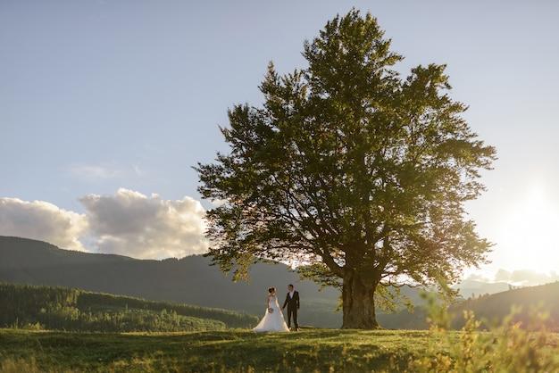 Fotografia di matrimonio in montagna. gli sposi tengono la mano vicino al vecchio faggio di 100 anni. tramonto.