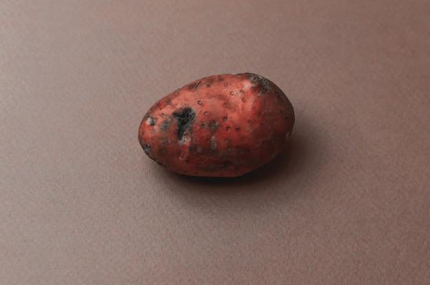 La patata rossa organica dello strano brutto mutante frastagliata di punture di insetti