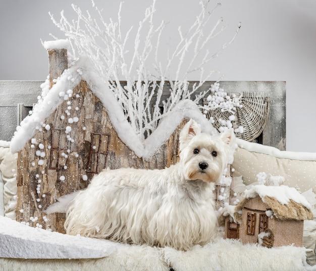 West highland white terrier davanti a uno scenario natalizio