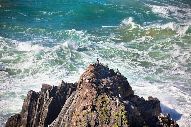 Costa occidentale dell'oceano del portogallo. uccelli selvatici su una scogliera. scatto vignettato