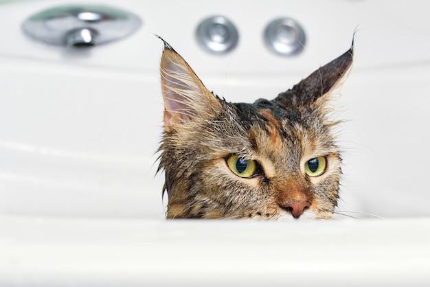 Gatto bagnato nel bagno