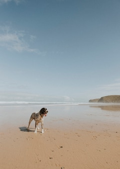 Cane bagnato che si gode la spiaggia