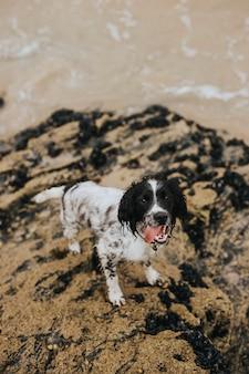 Cane bagnato su una spiaggia sabbiosa