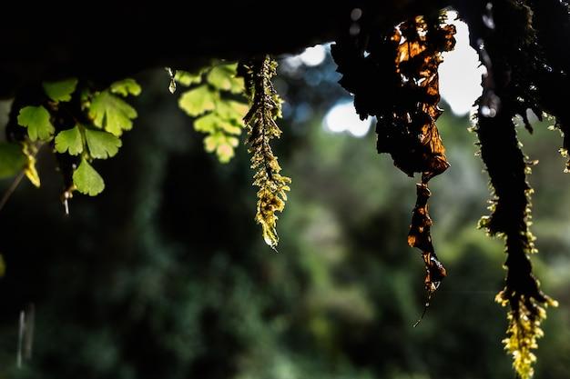 Germogli bagnati di erba fresca che gocciola.