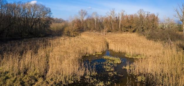 Zona umida con canna che cresce intorno all'acqua in una soleggiata giornata di primavera dalla vista di drone