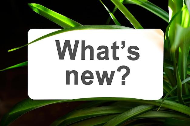 Cosa c'è di nuovo testo su bianco circondato da foglie verdi