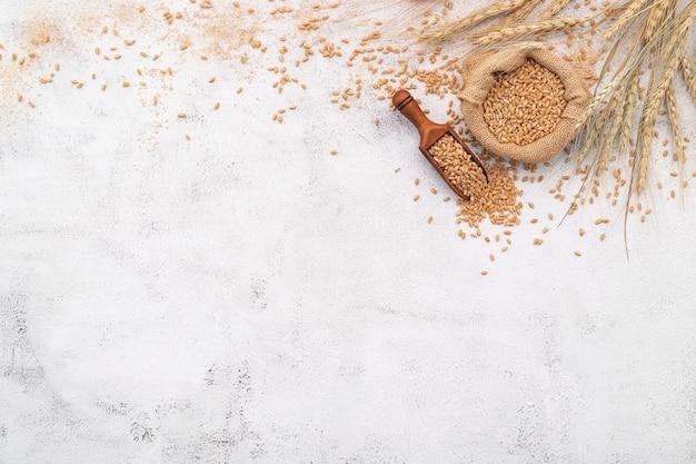 Spighe di grano e chicchi di grano allestiti su sfondo di cemento bianco.