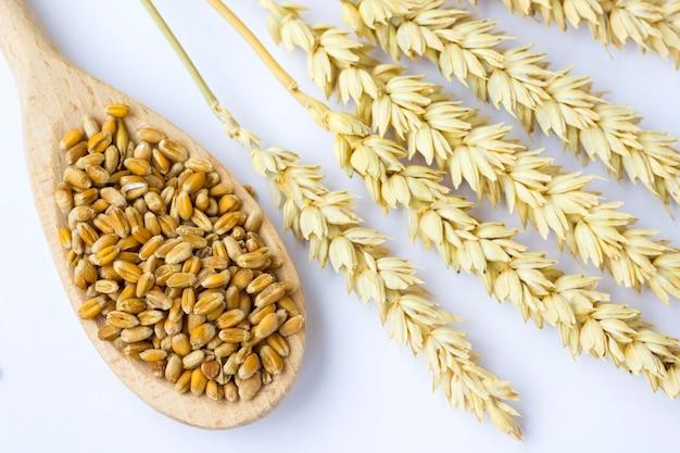 Chicco di grano in cucchiaio di legno e rametti di grano