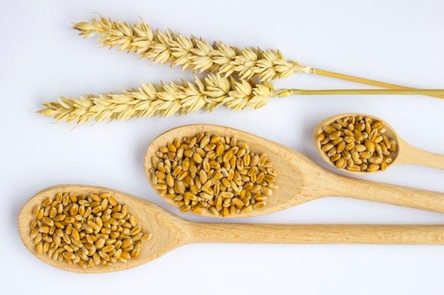 Chicco di grano in cucchiai di legno e rametti di grano. sfondo bianco.