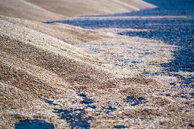 Il grano è sul sito di semina pulizia sypcework