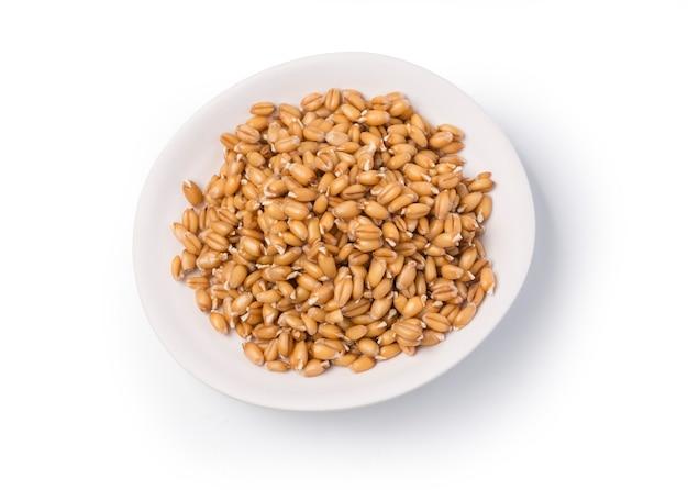 Germogli di grano in una ciotola, isolati su bianco