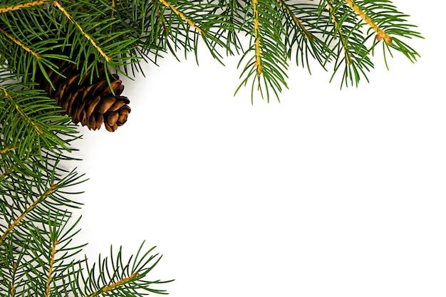 Su uno sfondo bianco rami di un albero di natale con una pigna