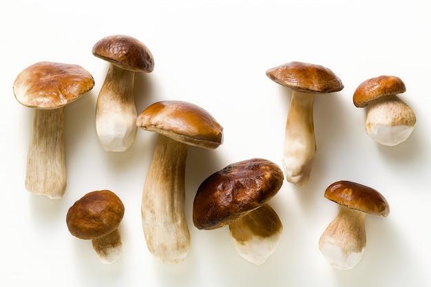 Funghi porcini grandi belli bianchi su bianco