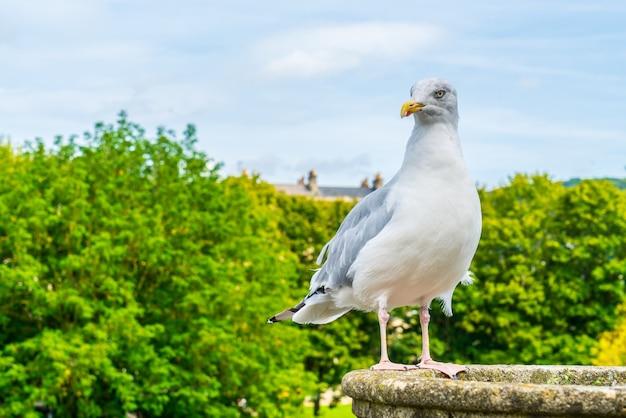 Uccello bianco con albero. e cielo