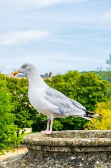 Uccello bianco con alberi e cielo