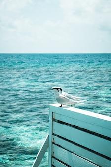 Uccelli bianchi con sfondo del mare delle maldive