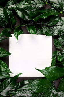 Carta bianca bianca su un tavolo scuro con foglie verdi sui lati, layout creativo, disposizione piatta