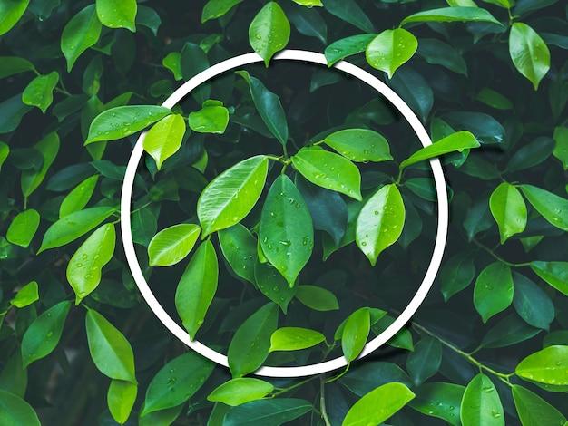 Cornice rotonda o cerchio vuota bianca su sfondo di foglie verdi
