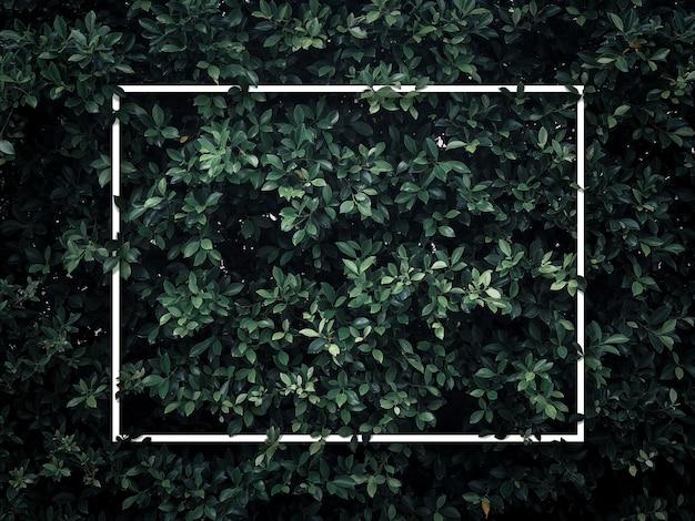Cornice quadrata vuota bianca su sfondo di foglie verdi