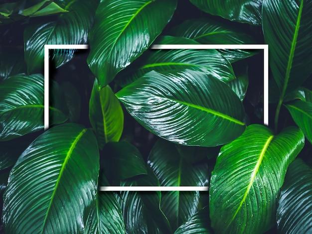 Cornice quadrata vuota bianca su sfondo di foglie verdi bagnate