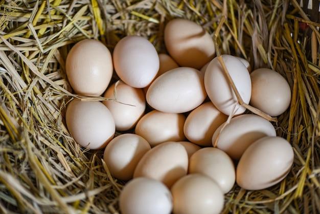 Uova bianche e marroni sul nido del cestino