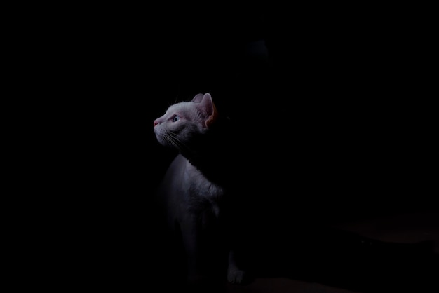 Gatto bianco in camera oscura concetto scuro