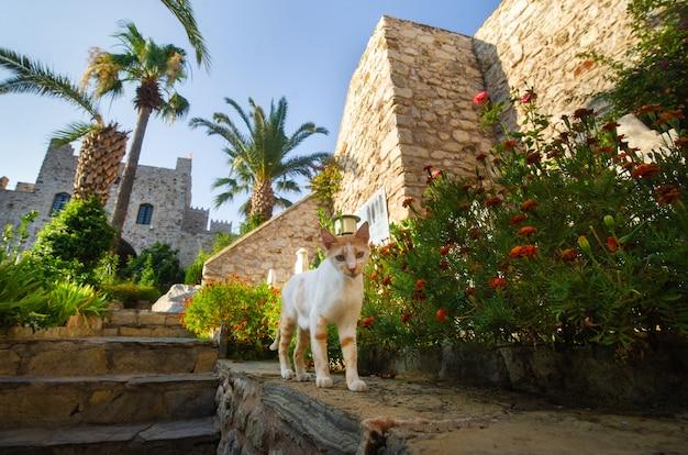 Gatto bianco nella fortezza sull'argine della città di marmaris.turkey