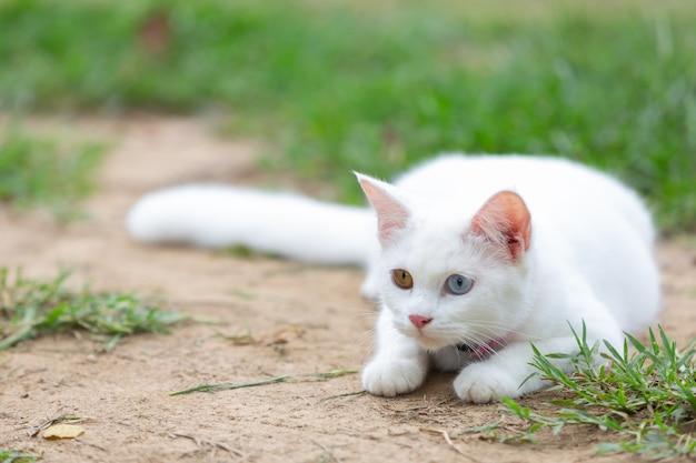 Gatto bianco in giardino