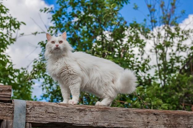 Gatto bianco all'aperto godimento della libertà della natura