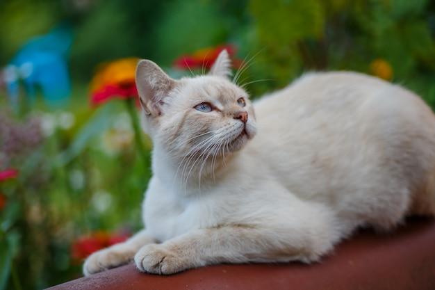 Gatto bianco per strada. animale su sfondo di erba verde.