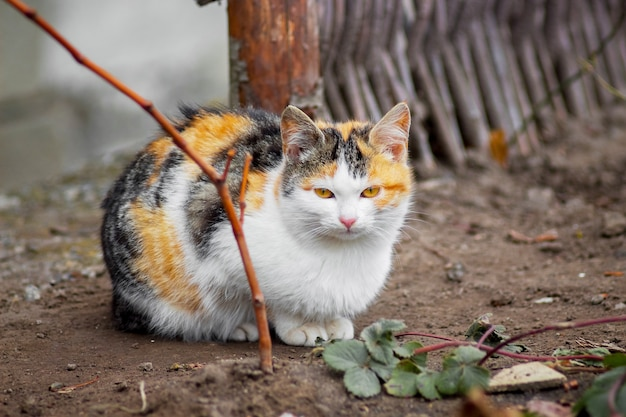 Gatto bianco con macchie nere e arancioni seduto per terra in giardino