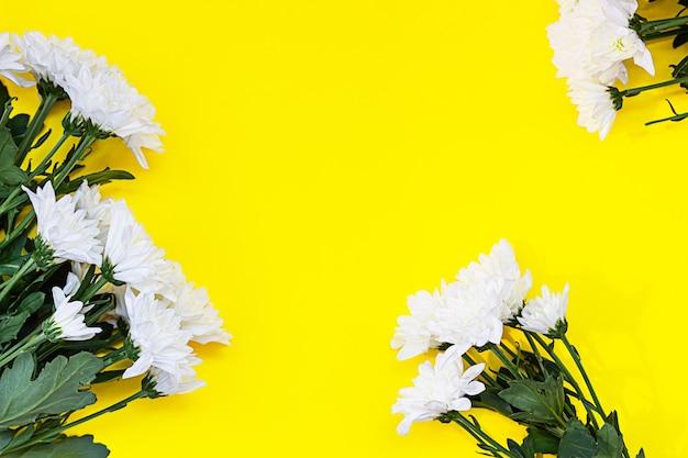 Crisantemo bianco su sfondo giallo. fiori d'autunno. sfondo di fiori. lay piatto. copia spazio.
