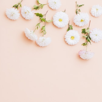 Crisantemi bianchi su sfondo di carta rosa