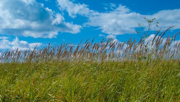 Nuvole bianche sul cielo blu attraverso l'erba verde brillante