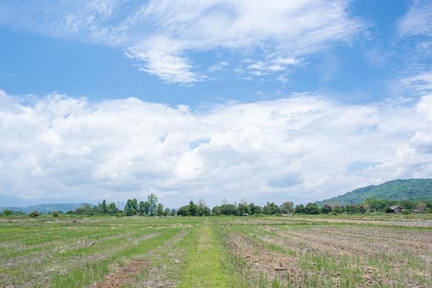 Le nuvole bianche hanno una forma strana e un lato del paese. cielo nuvoloso e blu.