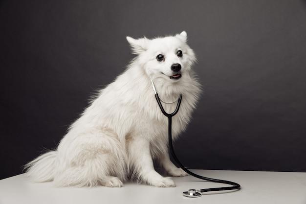 Cane bianco sul tavolo in clinica veterinaria.