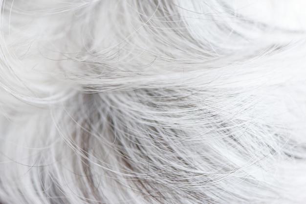 Fine della pelliccia della lana dei cani bianchi sulla carta da parati di struttura.