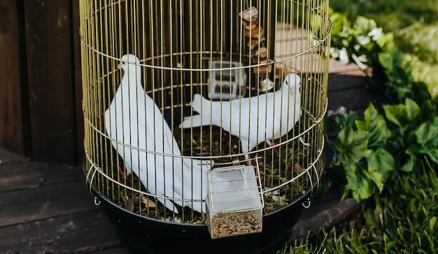 Colombe bianche in una gabbia dorata a un matrimonio sul prato